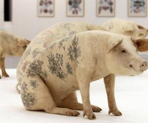 tattooed-pigs_1577472i