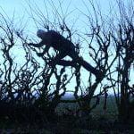 Andy Goldsworthy: Apoyándose en el viento